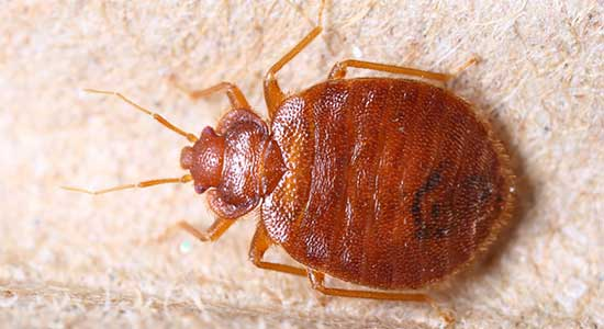 Stop bed bugs in their tracks with our bed bug inspection, spray & extermination services