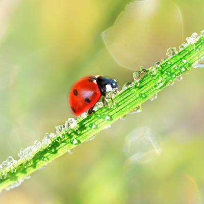 do bugs die in winter