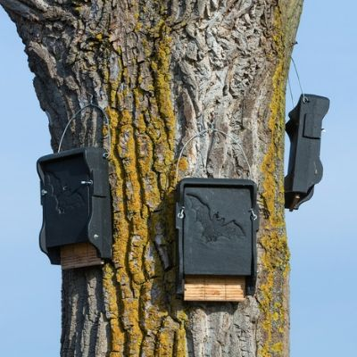 A creative way to control the mosquitoes in your yard is by introducing bats and other mosquito-eating predators to your property with a bat house.