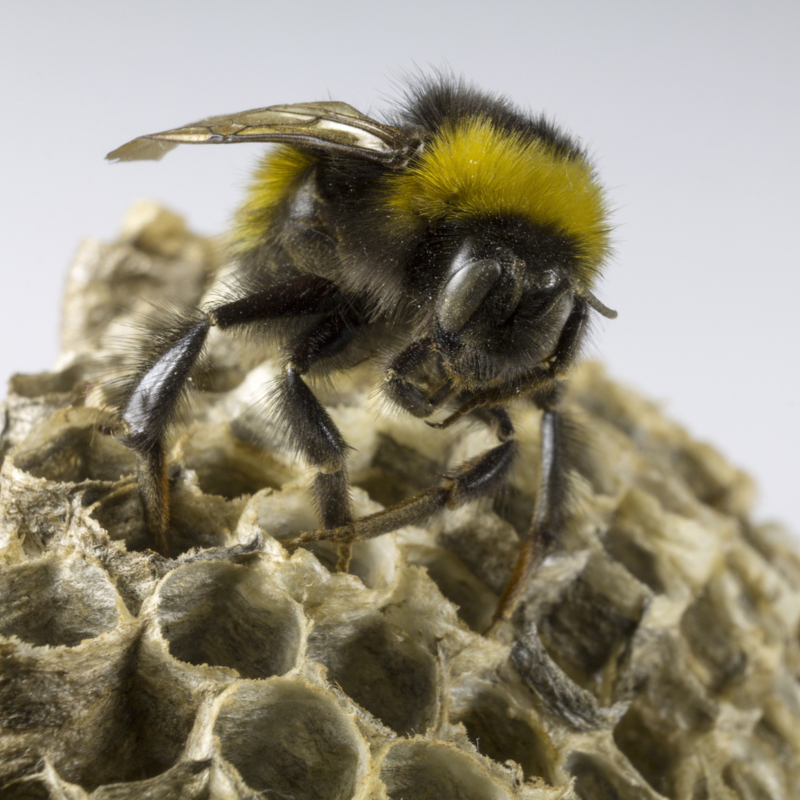 Call a professional for bee removal from your property.