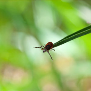 Ticks love to hang out on tall grass here in Hudson, MA, follow our fall tick prevention tips to keep ticks at bay this holiday season.